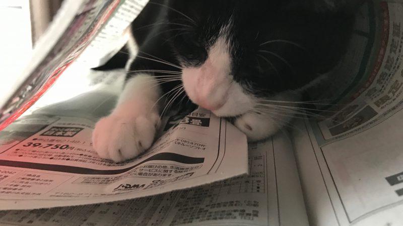 漱石 新聞が・・・